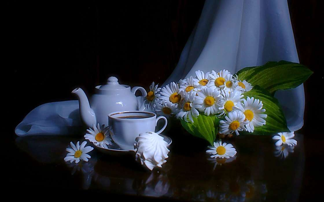 Flowers,Objects,Plants,Camomile