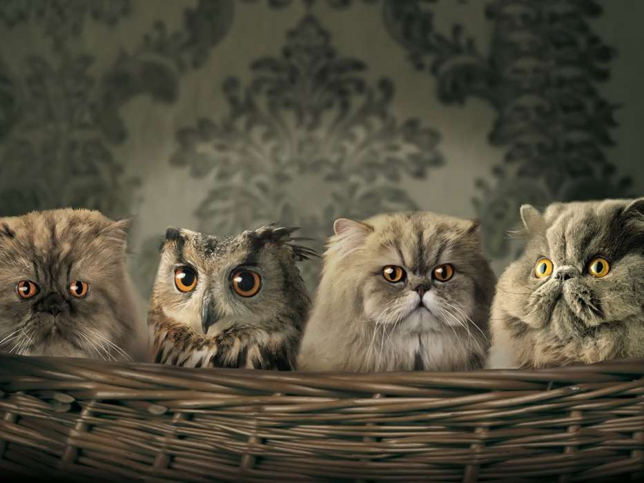 Owl,Animals
