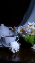 Handy-wallpaper kostenlose Flowers,Objects,Plants,Camomile