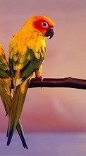 Handy-wallpaper kostenlose Parrots,Birds,Animals