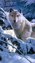 Pictures,Wolfs,Animals