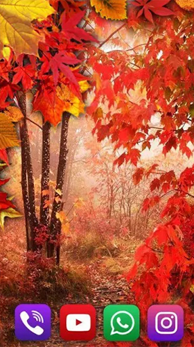 Download Interaktiv Live Wallpaper Autumn rain by SweetMood für Android kostenlos.
