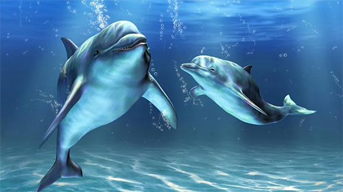 Download 3D Live Wallpaper Dolphins 3D by Mosoyo für Android kostenlos.