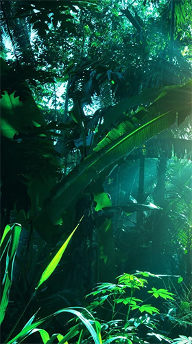 Download Landschaft Live Wallpaper Jungle by Pro Live Wallpapers für Android kostenlos.