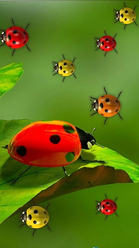 Live Hintergrundbilder Kostenlos Herunterladen ladybugs by 3d hd moving live wallpapers magic touch clocks