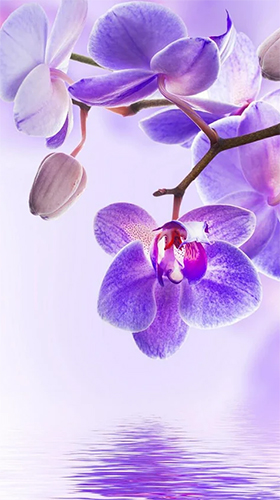 Download Blumen Live Wallpaper Orchid by Art LWP für Android kostenlos.