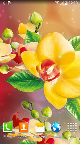 Download Blumen Live Wallpaper Orchids by BlackBird Wallpapers für Android kostenlos.