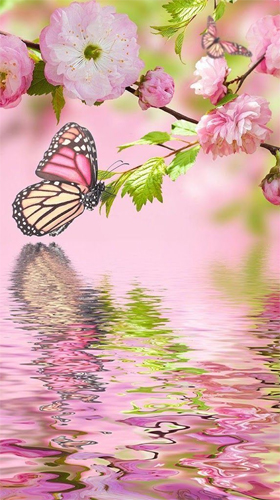 Download Tiere Live Wallpaper Pink butterfly by Live Wallpaper Workshop für Android kostenlos.