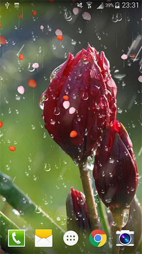 Download Blumen Live Wallpaper Rose: Raindrop für Android kostenlos.