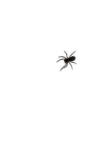 Download Tiere Live Wallpaper Spider by villeHugh für Android kostenlos.
