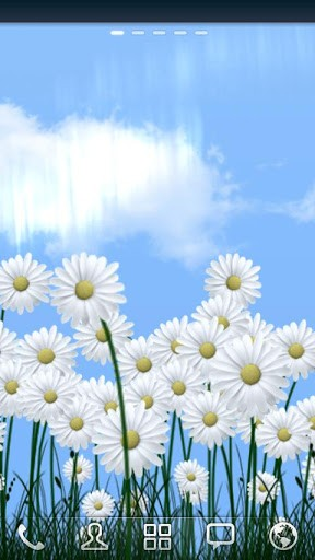 Download Live Wallpaper Daisies für Android-Handy kostenlos.
