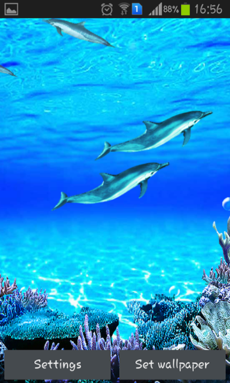 Kostenlos Live Wallpaper Dolphins sounds für Android Smartphones und Tablets downloaden.