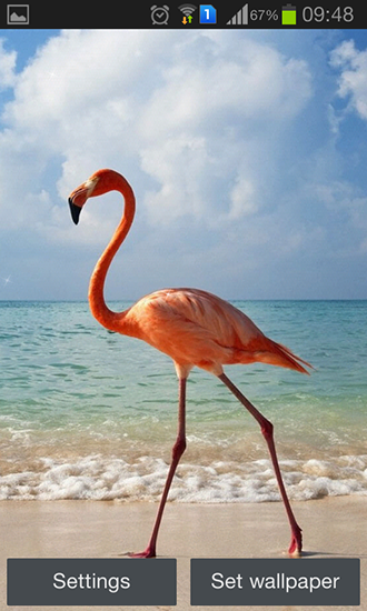 Download Live Wallpaper Flamingo für Android 4.4.4 kostenlos.