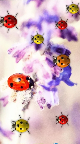Android Hintergrundbilder Ladybugs by 3D HD Moving Live Wallpapers Magic Touch Clocks kostenlos auf den Desktop herunterladen.
