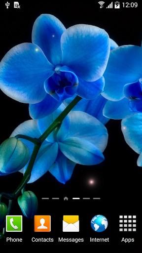 Orchids Kostenlos Fur Android Herunterladen