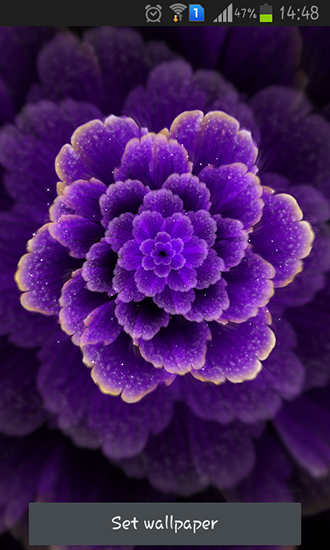 Kostenlos Live Wallpaper Purple flower für Android Smartphones und Tablets downloaden.