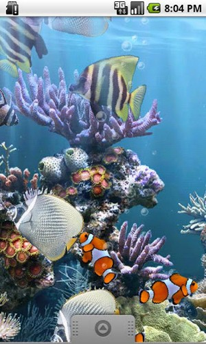 Download Live Wallpaper The real aquarium für Android-Handy kostenlos.