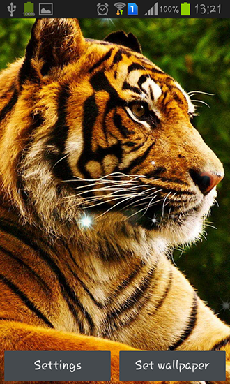 Download Live Wallpaper Tigers für Android 4.1.2 kostenlos.