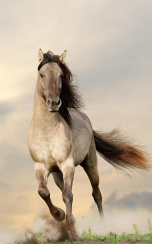 Pferde desktop-hintergrundbilder kostenlos Hintergrundbilder Pc