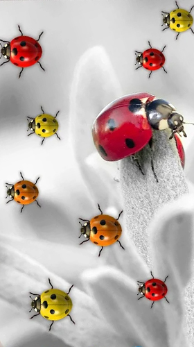 Bildschirm screenshot Ladybugs by 3D HD Moving Live Wallpapers Magic Touch Clocks für Handys und Tablets.