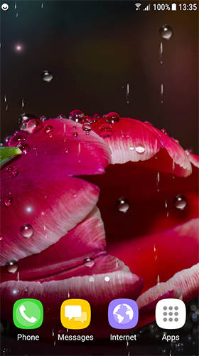 Tulips by Live Wallpapers 3D
