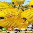 Live Wallpaper Aquarium by Top Live Wallpapers apk auf den Desktop deines Smartphones oder Tablets downloaden.