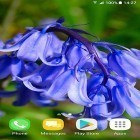 Live Wallpaper Beautiful spring flowers apk auf den Desktop deines Smartphones oder Tablets downloaden.