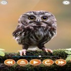Live Wallpaper Bird sounds apk auf den Desktop deines Smartphones oder Tablets downloaden.