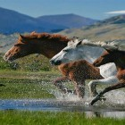 Download Horses by Pro Live Wallpapers kostenlos live wallpaper für Android Handys und Tablets.