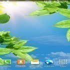 Live Wallpaper Leaves by BlackBird Wallpapers apk auf den Desktop deines Smartphones oder Tablets downloaden.