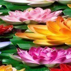 Live Wallpaper Lotus by Latest Live Wallpapers apk auf den Desktop deines Smartphones oder Tablets downloaden.
