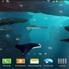 Live Wallpaper Sharks 3D by BlackBird Wallpapers apk auf den Desktop deines Smartphones oder Tablets downloaden.