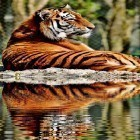 Live Wallpaper Tigers by Live Wallpaper HD 3D apk auf den Desktop deines Smartphones oder Tablets downloaden.