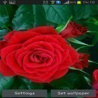 Neben Live Wallpapern für Android Ladybugs by 3D HD Moving Live Wallpapers Magic Touch Clocks kannst du die apk des Hintergrunds Blooming red rose gratis herunterladen.
