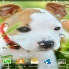 Neben Live Wallpapern für Android Ladybugs by 3D HD Moving Live Wallpapers Magic Touch Clocks kannst du die apk des Hintergrunds Cute animals gratis herunterladen.