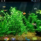 Live Wallpaper Fishbowl apk auf den Desktop deines Smartphones oder Tablets downloaden.